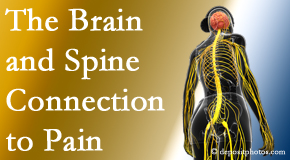 Executive Chiropractic of Iowa shares at the connection between the brain and spine in back pain patients to better help them find pain relief.